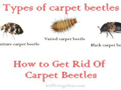 Effective Ways Of Getting Rid Of Carpet Beetles