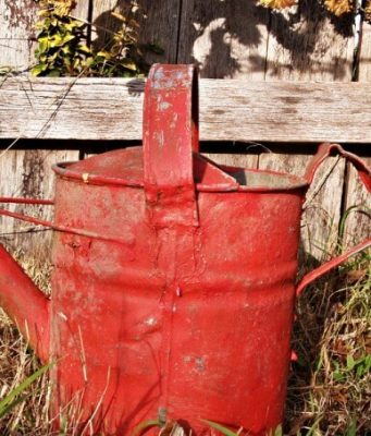 Natural Ways To Get Rid Of Garden Weeds Permanently