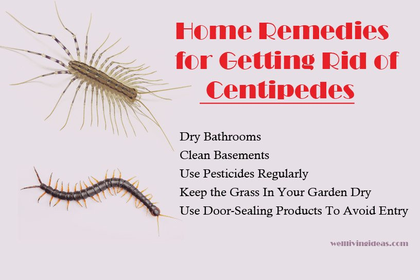 Home Remedies for Getting Rid of Centipedes