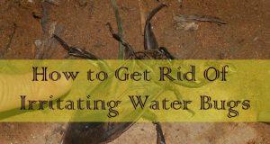 Get Rid Of Irritating Water Bugs