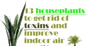Best houseplants to get rid of toxins and improve indoor air quality