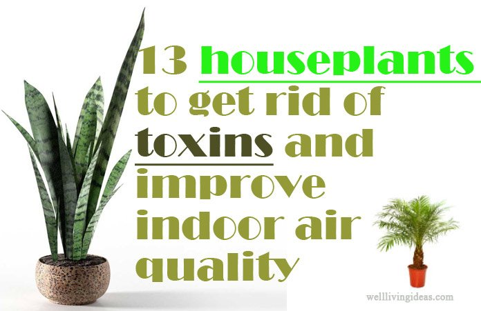 Best Houseplants For Air Quality Euffslemani Com