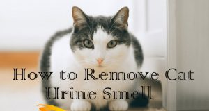 Home Remedies for Cat Urine Odor Removal