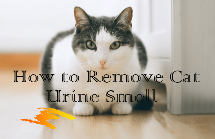 Prime 11 Effective Home Remedies For Cat Urine Odor Removal Uwap Interior Chair Design Uwaporg