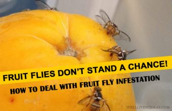 Home Solutions for Getting Rid of Fruit Fly Infestation