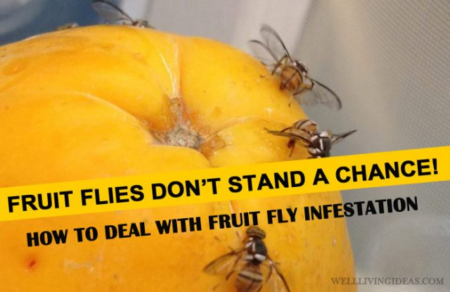 10 Best Home Solutions For Getting Rid Of Fruit Fly
