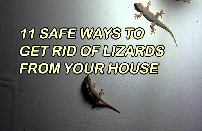 How to get rid of skink lizards