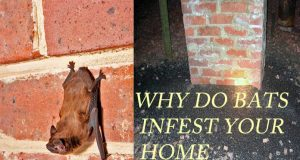 How to Get Bats Out of Your House