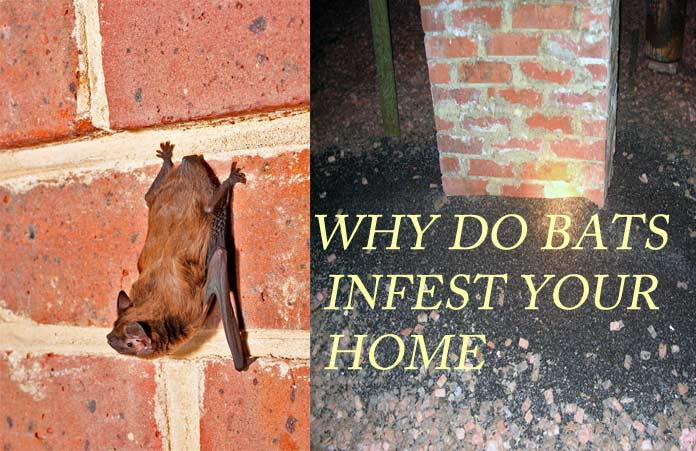 How To Get Bats Out Of Your House Best Way To Trapping
