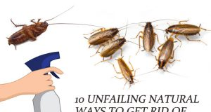 Natural Ways to Get Rid of German Roaches (Baby Roaches)