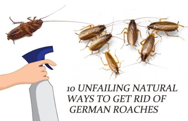 10 Unfailing Natural Ways To Get Rid Of German Roaches