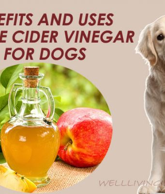 Benefits And Uses Of Apple Cider Vinegar For Dogs