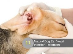 Home Remedies For Dog Ear Yeast Infection