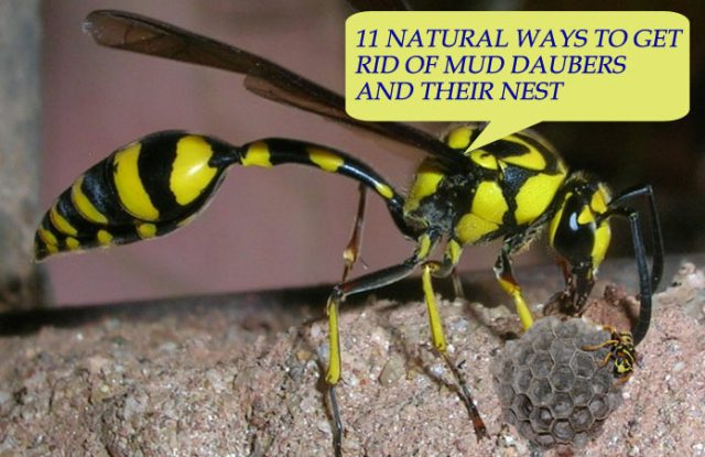 Natural Ways To Get Rid Of Garden Pests
