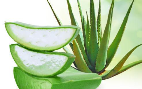 aloe vera Keloid On Nose Piercing Treatment