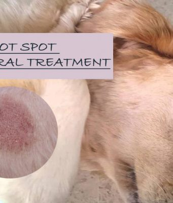 Natural Home Remedies For Dog Hot Spot Treatment