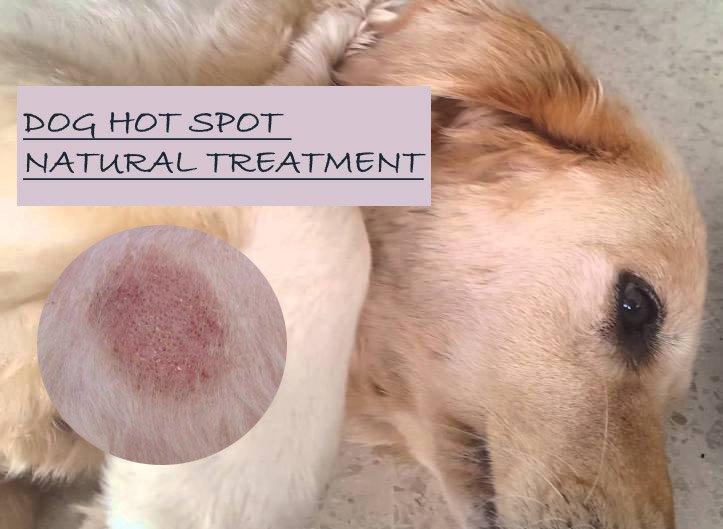 dog hot spot home remedy