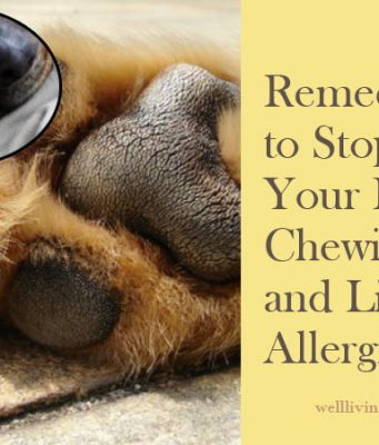 Home Remedies to Stop Your Dog Chewing and Licking Allergic Paws