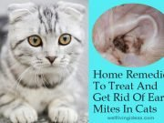 Home Remedies To Treat And Get Rid Of Ear Mites In Cats