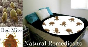 Home Remedies to Get Rid of Bed Mites