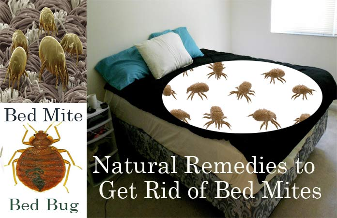 20 Natural Home Remedies To Get Rid Of Bed Mites Dust Mites