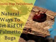 Natural Ways To Get Rid Of Palmetto Bugs Florida