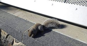 Natural Ways to Keep Squirrels Away from Your Yard