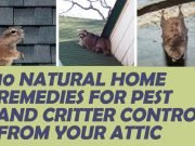 Natural Ways To Get Rid Of Critter From Your Attic