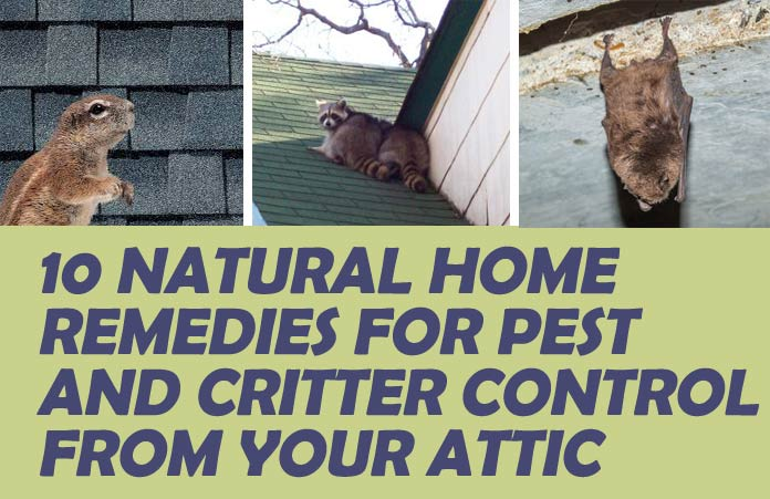 10 Natural Home Remedies For Pest And Critter Control From