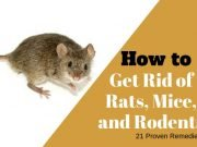 Home Remedies to Get Rid of Rats, Mice, and Rodent