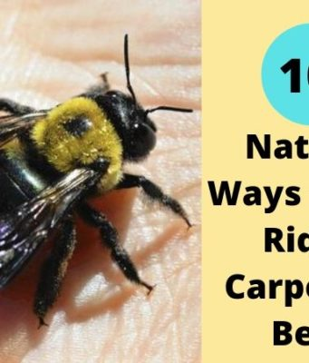 Natural Ways to Get Rid of Carpenter Bees