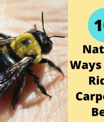 Natural Ways to Get Rid of Carpenter Bees